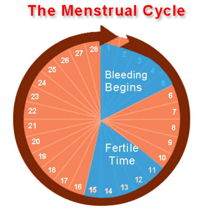 safe sex before after menstrual period in Westminster